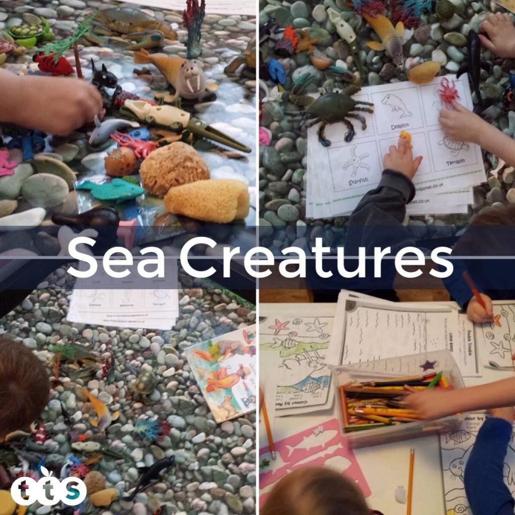 Sea creatures in a tuff spot tray