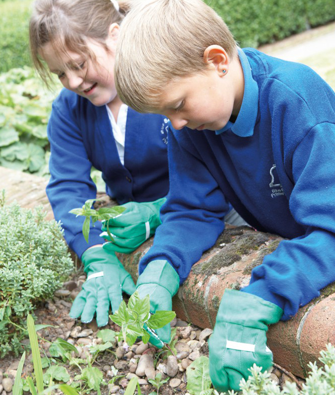 School garden club