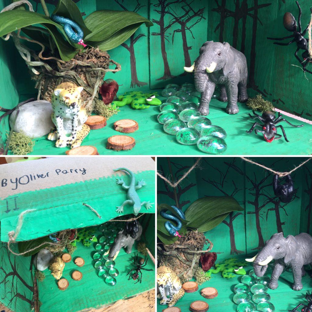 Rainforest in a shoe box