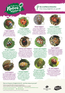 Ladybird identification for kids – Nature Detectives