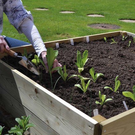 Vegetable sowing and growing guide